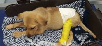 Sauvetage Petite chienne